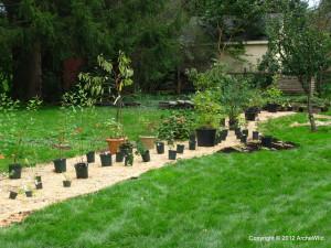 2012-ArcheWild-CLIENT-Landscape-Hedgerow-004