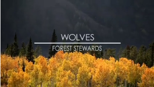 Wolves-forest-stewards