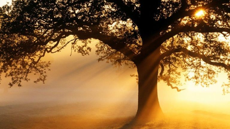 'Wrong Type Of Trees' In Europe Increased Global Warming