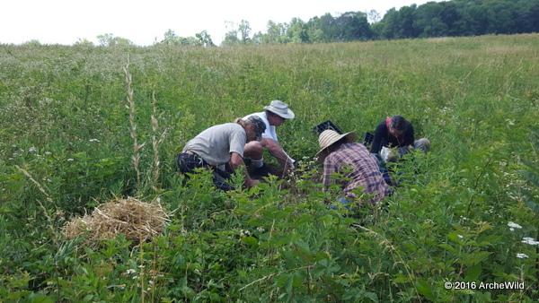 ArcheWild – Springfield Township Meadow Restoration