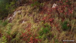 2016 ArcheWild - Fines Creeek NC - Carex appalachica 066d - 20150929_191231