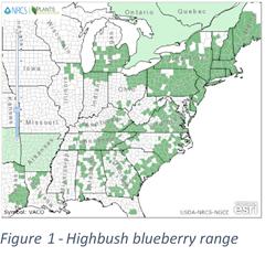 USDA highbush blueberry
