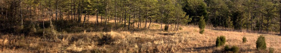 Native Americans used fire to keep the Serpentine barrens in Pennsylvania open for hunting