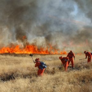 Controlled Burning May Become An Accepted And Adopted Restoration Practice