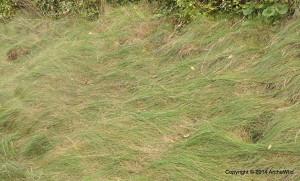 2014 Laurel Ridge - Carex appalachica