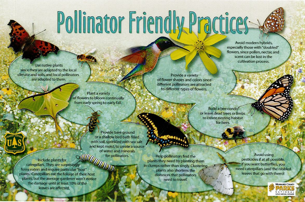 sign pollinators Taking Action to Preserve Native Pollinators  ArcheWild