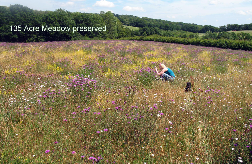 Conservation Meadow