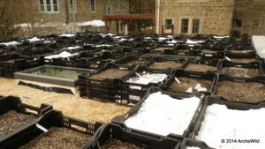 2014 ArcheWild Green Roof - Installing trays and research labels 2-25-2014 4-00-03 PM