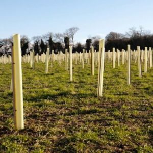 Tree Planting At 'an All Time Low'