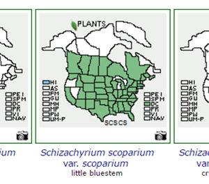 Native Plant Labeling Standards