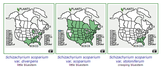 Native Plant Labeling Standards