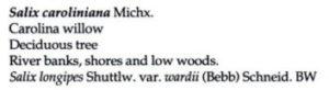 Salix caroliniana from Vascular Flora of PA description