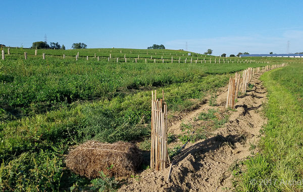 Agroforestry Contour Swale Planted And Caged